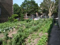 Vacant lot garden