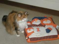 Calico cat and Illini pillow.