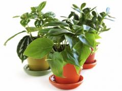 share houseplants