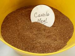 canola meal