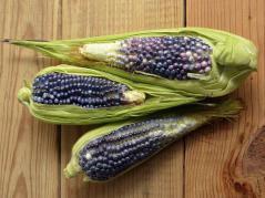 blue corn