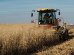 harvesting biomass crop