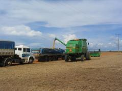 Soybean harvest operations near Sinop, Mato Grosso, Brazil.