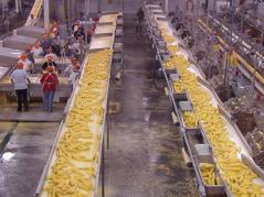 sweet corn processing plant