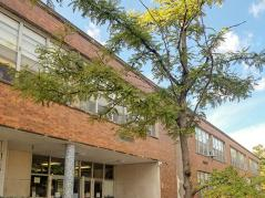 School with tree