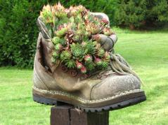 Container gardening in a shoe