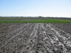 Wet field