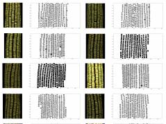 images of corn kernels