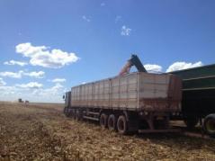 Harvest in Parana, Brazil.