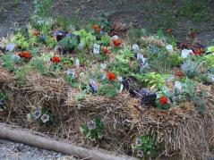 Herbs planted in straw bale