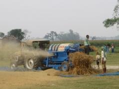India Grain