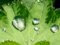 Water droplets on leaf