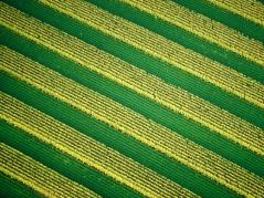 Aerial photo of crops