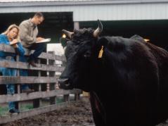 bull test
