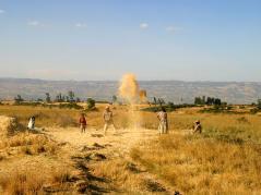 Family threshing in field in Ethiopia