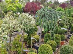 trees at nursery