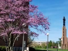 Redbud tree blooming by ACES library